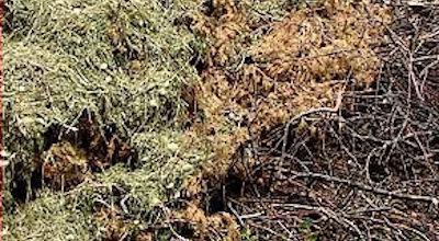 Organic materials - Brushwood